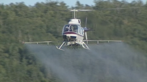 glyphosate-spraying
